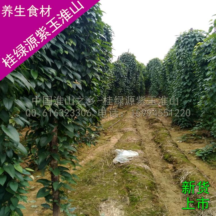 壁纸 成片种植 风景 树 植物 种植基地 桌面 750_750